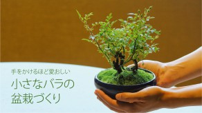 nagoya_bonsai_web_th_1419_797